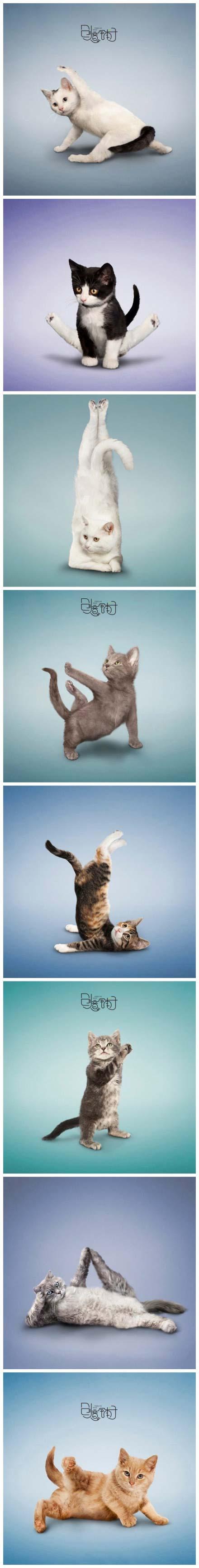 รูปสัตว์น่ารัก ๆ