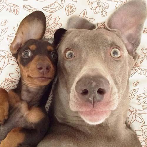 รูปสัตว์น่ารัก
