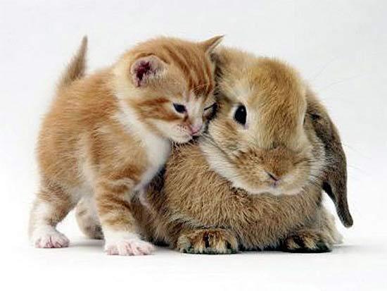 แมวที่น่ารักที่สุดในโลก