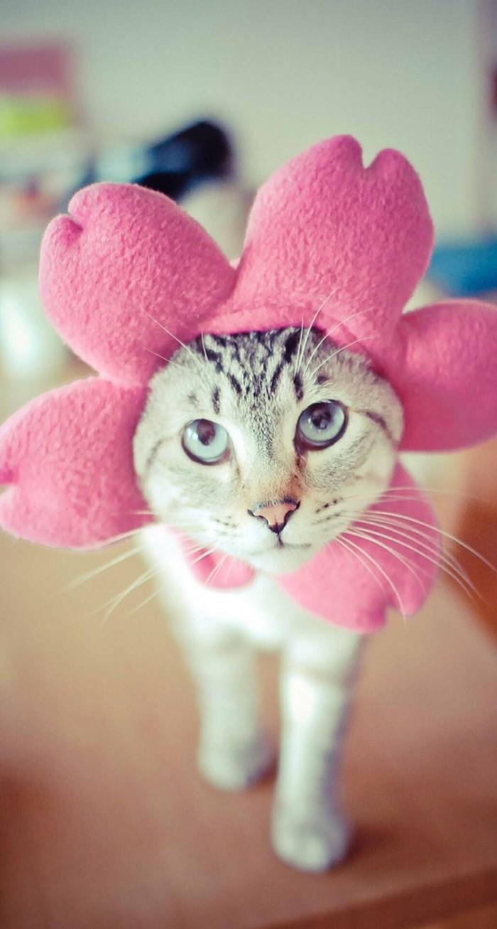 วอลเปเปอร์มือถือลายแมวน่ารัก